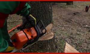 Как правильно валить деревья бензопилой: основные правила, техника безопасности, методы распила стволов