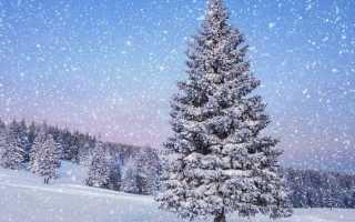 Дизельные снегоуборщики — преимущества, особенности, характеристики